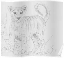 Lion cub pencil drawing Poster