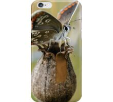 Brown Argus Butterfly iPhone Case/Skin
