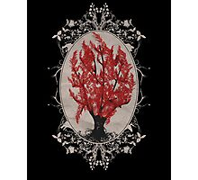 Weirwood Tree Photographic Print