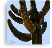 Saguaro in Gilbert, AZ Canvas Print