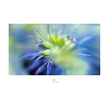 Colour Burst Photographic Print