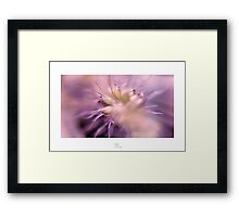 Colour Burst  Framed Print