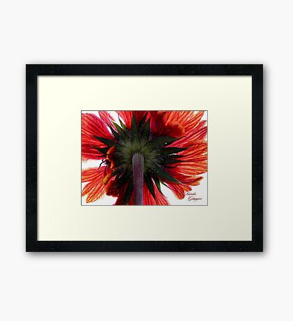 The Back of the Petals Framed Print
