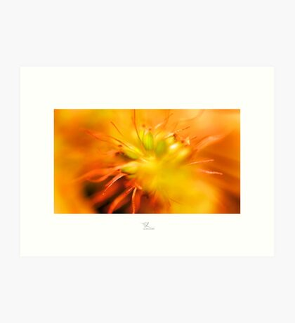 Colour Burst Art Print