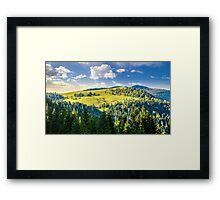 coniferous forest on the hill Framed Print