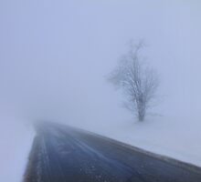 Fog and Snow by Angelika  Vogel