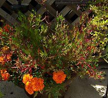 ORANGE FLOWERS by jclegge