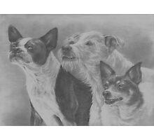 Terrier Trio Photographic Print