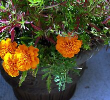 ORANGE FLOWERS UP CLOSE by jclegge