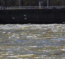 Sea Gulls On The River by WildestArt