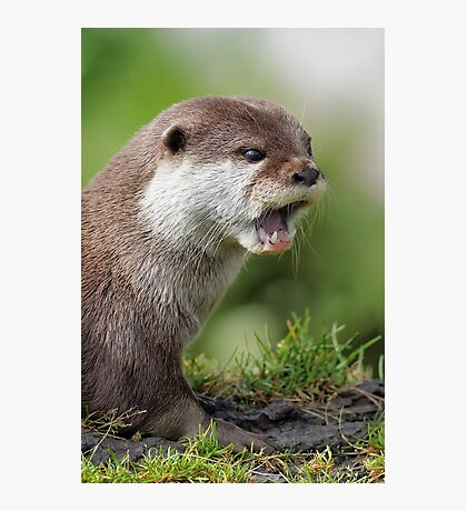 Otter Photographic Print