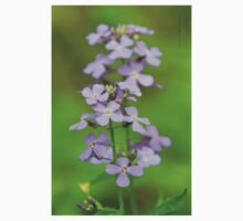 Wild Flowers (Dame's Rocket - Hesperis matronalis) One Piece - Long Sleeve