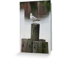 Salem seagull Greeting Card