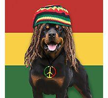Rasta Dog Photographic Print