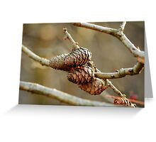 Natures Gift Greeting Card