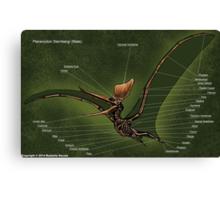 Male Pteranodon Sternbergi Skeleton Canvas Print