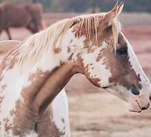 Palomino Paint by thelimeequine