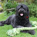 Izzy With Her New Toy by Vicki Spindler (VHS Photography)