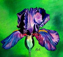 Iris by Laura Bell