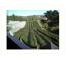 Vineyards Art Print