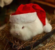 Festive Santa rabbit  by Barry Robinson