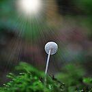 Mushroom edit by relayer51
