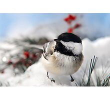 Chilly Chickadee Photographic Print