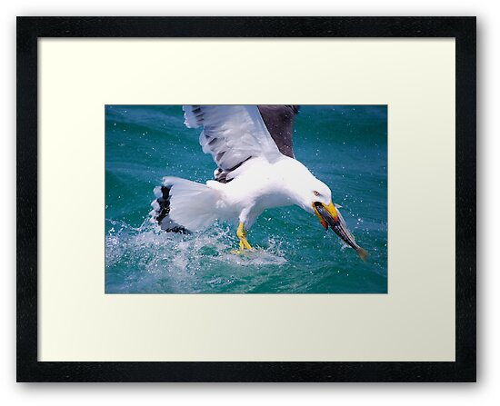 It's Mine - Pacific Gull by Ian Berry