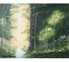 Carrie's Forest Photographic Print