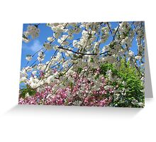 Blue Sky and Beautiful Blossoms Greeting Card