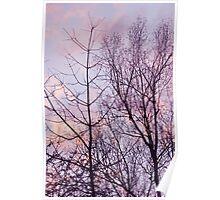 Barren trees ~ evening sky Poster