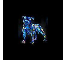 dog in the dark Photographic Print
