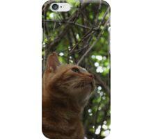 Wild Ginger iPhone Case/Skin