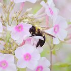 Bumblebee & Phlox by Laurie Minor