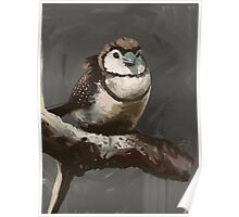Owl Finch Cosy Poster