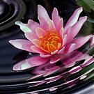 Lily Ripples by Monnie Ryan