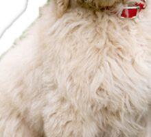 Goldendoodle puppy Sticker