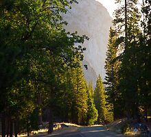 Sunrise over Trees and King's Canyon Road by Gavin Heffernan