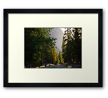 Sunrise over Trees and King's Canyon Road Framed Print