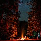Camping Under Stars and Trees Night by Gavin Heffernan