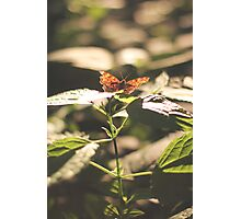 Butterfly ii Photographic Print