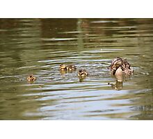 Swimming Lessons Photographic Print