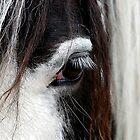 Paint Horse Portrait by Oldetimemercan