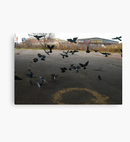 Pigeons Flight in Montreal Suburb. Canvas Print