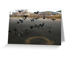 Pigeons Flight in Montreal Suburb. Greeting Card