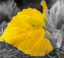 Autumn Poplar Leaf In Black and White Sticker
