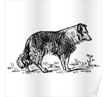 Vintage Collie - Woodcut style Poster
