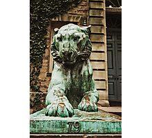 Princeton Tiger 3 Photographic Print