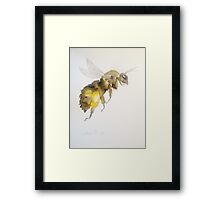 Honey Bee by Liz H Lovell Framed Print