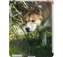 The Dingo iPad Case/Skin